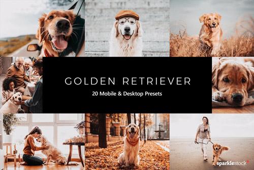 Golden Retriever.jpg